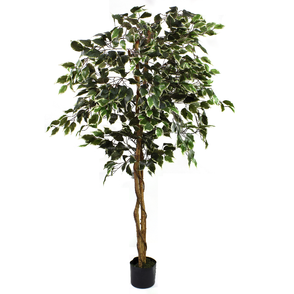 Artificial Ficus Tree Variegated 5ft Indoor Artificial