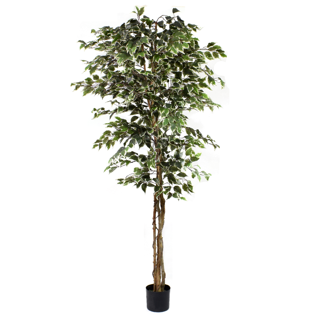 artificial ficus tree variegated 7ft - indoor artificial tree