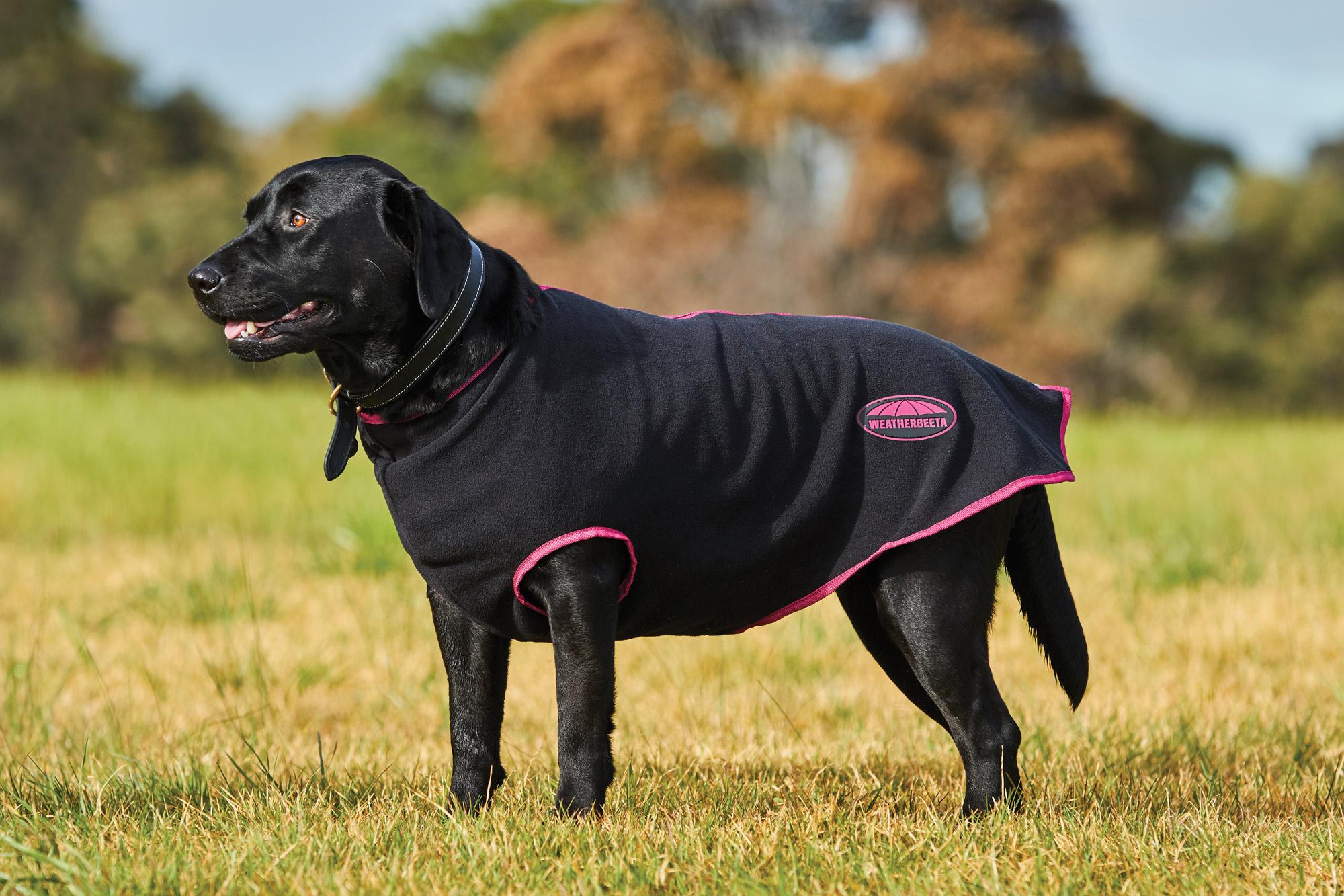 Details About Weatherbeeta Fleece Zip Dog Coat Black Boysenberry